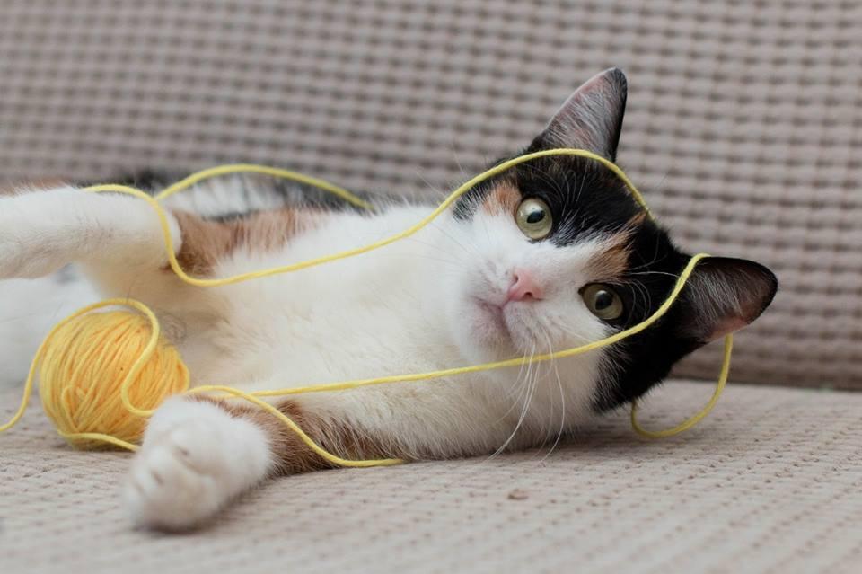 Котка 3.jpg
